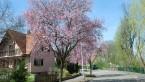 Mundolsheim en fleurs